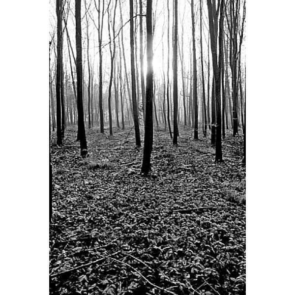 Adrian Lack - Woodland I
