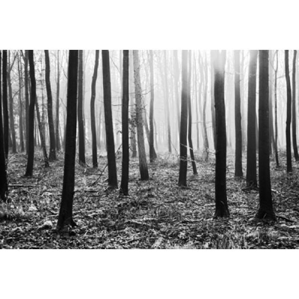 Adrian Lack - Woodland II