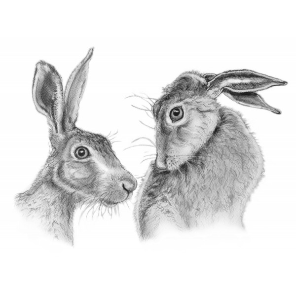 Al Hayball - Shy Hares
