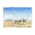 Alan Reed - Camels, Oman