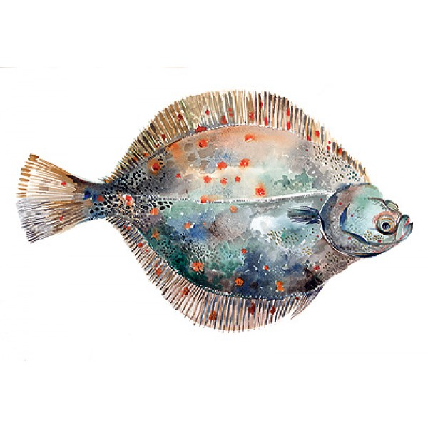 Angie Horder - Plaice