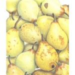 Ann Swan - Baby 'Beth' Pears