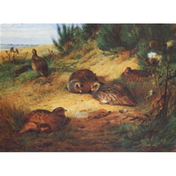 Archibald Thorburn - A Covey of Partridge
