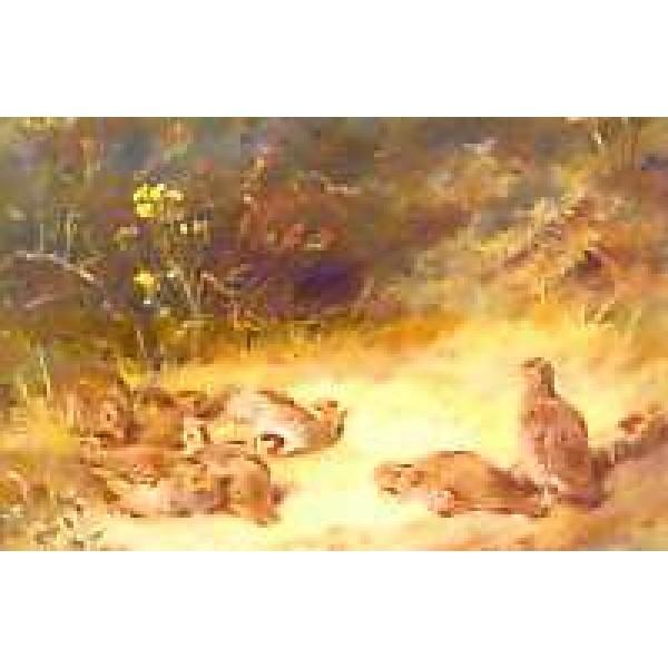 Archibald Thorburn - Autumn - Partridge