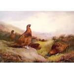 Archibald Thorburn - Autumn Glory
