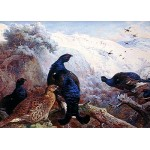 Archibald Thorburn - Black Grouse in Winter