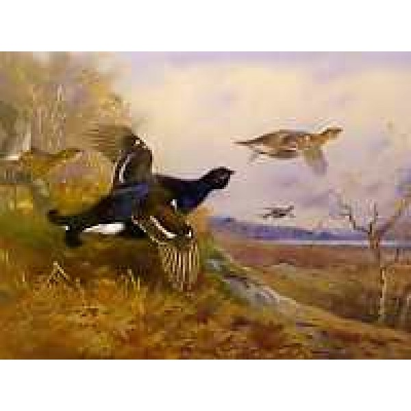 Archibald Thorburn - Blackgame