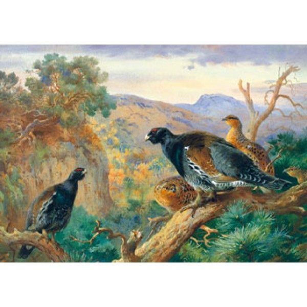 Archibald Thorburn - Capercaillie