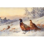 Archibald Thorburn - Cock and Hen Pheasant in the Snow