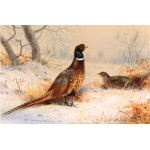 Archibald Thorburn - Cock and Hen Pheasant