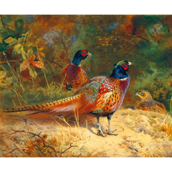 Archibald Thorburn - Cock and Hen Pheasants in the Woodlands