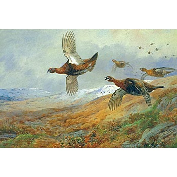 Archibald Thorburn - Grouse in Flight