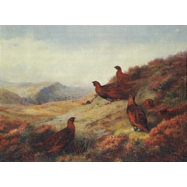 Archibald Thorburn - Home of the Red Grouse