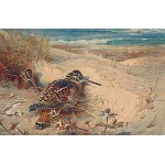 Archibald Thorburn - In From the North Sea