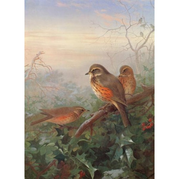 Archibald Thorburn - Out In The Cold