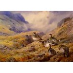 Archibald Thorburn - Ptarmigan in the Glen