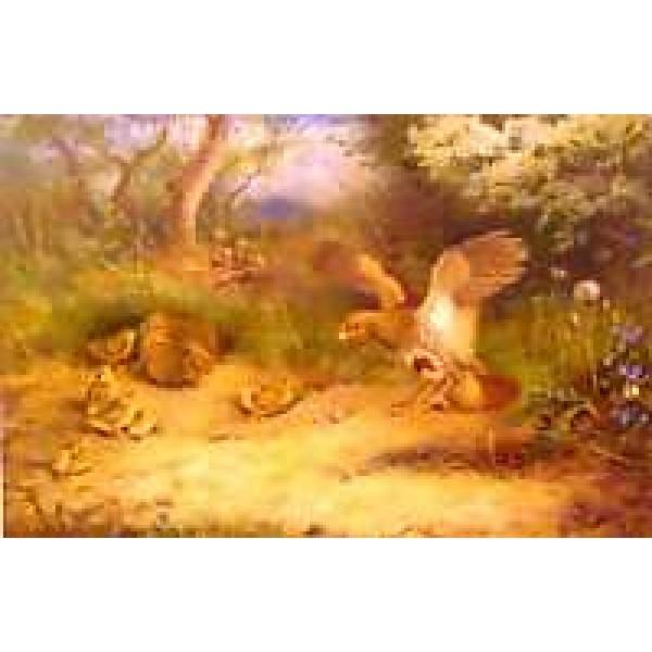 Archibald Thorburn - Summer - Partridge