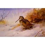 Archibald Thorburn - Winter - Woodcock