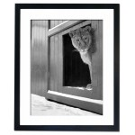 Lioness at the Zoo Framed Print