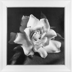 Floral & Still Life