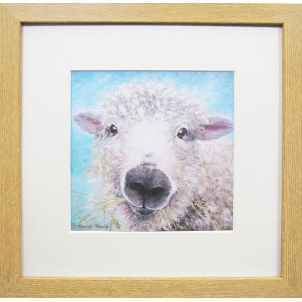 Animal Farm Sheep Framed Print