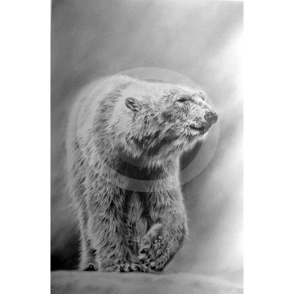 Jamie Boots - Artic Wanderer (Polar Bear)