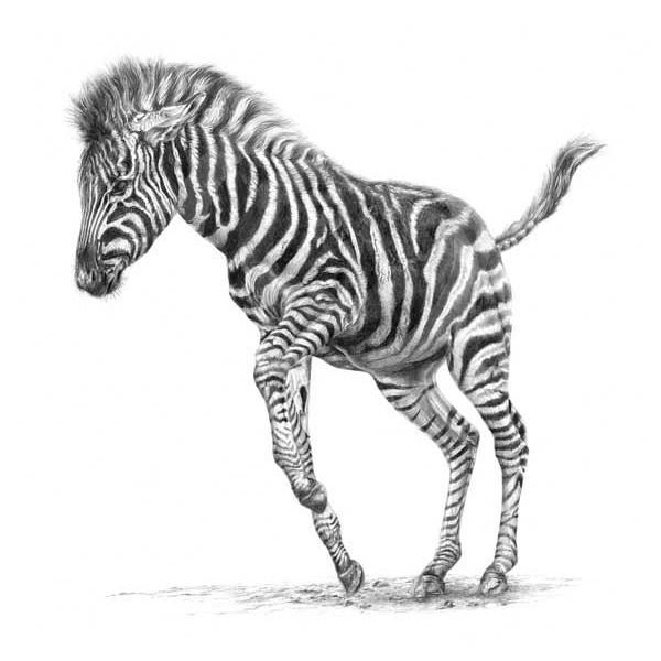 Jamie Boots - Dancer In Stripes Large (Chapmans Zebra)