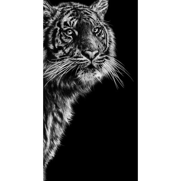 Jamie Boots - Dangerous Contrast (Sumatran Tiger)