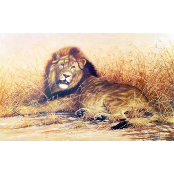 Kim Brooks - The Savuti Lion
