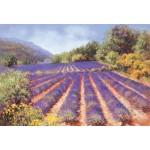Maureen Jordan - Lavender in Provence