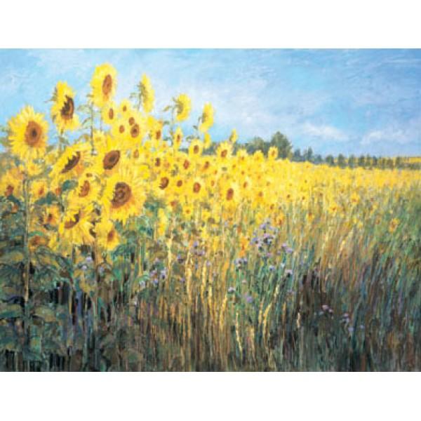 Maureen Jordan - Sunflowers