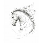 Scott Tetlow - Spirit
