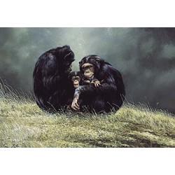 Gorillas & Monkeys