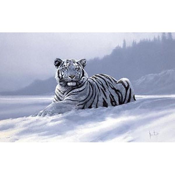 Spencer Hodge - Siberian Tiger