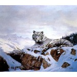 Spencer Hodge - White Siberian Tiger
